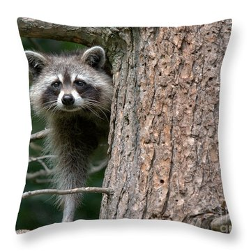 Looking For Food Throw Pillow by Cheryl Baxter