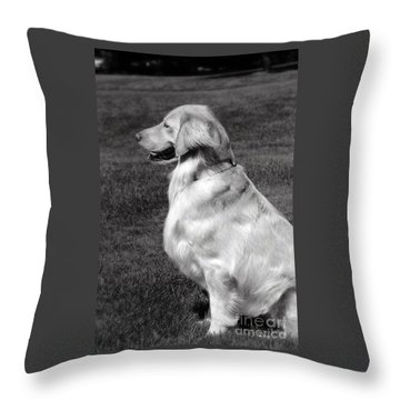 Looking Golden Throw Pillow
