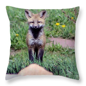 Take Me Home Throw Pillow by Fiona Kennard