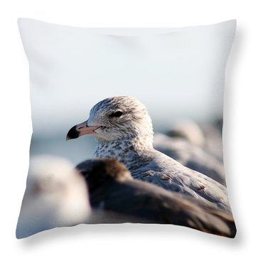 Looking Seagull Throw Pillow