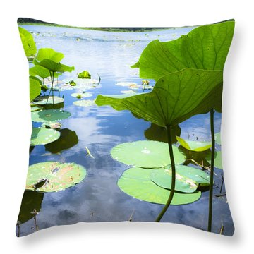 Looking Toward The Sun Throw Pillow
