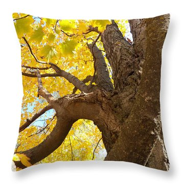 Looking Up The Maple Tree Throw Pillow