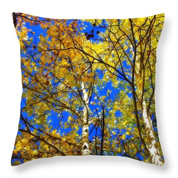 Throw Pillow featuring the photograph Looking Up To Autumn 2 by Diane Alexander