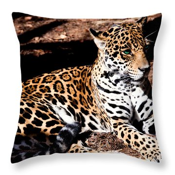 Looks Are Deceiving Throw Pillow