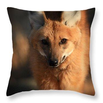 Looks Like A Fox Throw Pillow by Karol Livote