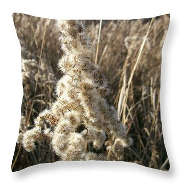 Throw Pillow featuring the photograph Looks Like Cotton by Sara  Raber