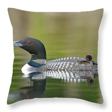 Loon Chick With Parent - Quiet Time Throw Pillow