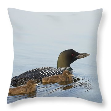 Loon Chicks Cruising With Mom Throw Pillow