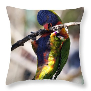 Lorikeet Bird Throw Pillow by Marilyn Hunt