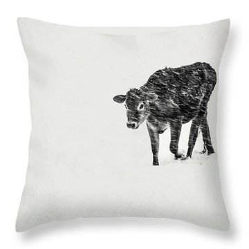 Lost Calf Struggling In A Snow Storm Throw Pillow by Edward Fielding