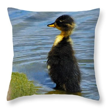 Throw Pillow featuring the photograph Lost Duckling by Olivia Hardwicke