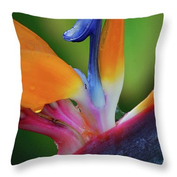 Throw Pillow featuring the photograph Lost In Paradise by Jani Freimann