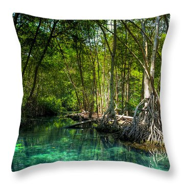 Throw Pillow featuring the photograph Lost Lagoon On The Yucatan Coast by Mark E Tisdale