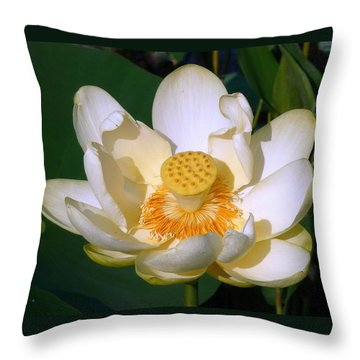 Throw Pillow featuring the photograph Lotus Blossom # 1 by Jim Whalen