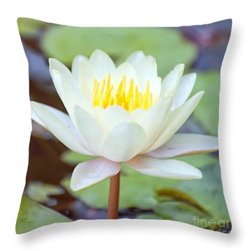 Lotus Flower 02 Throw Pillow by Antony McAulay