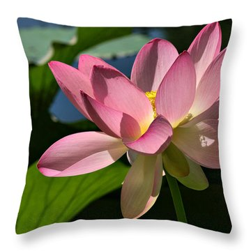 Lotus - Flowers Throw Pillow