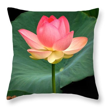 Lotus Of Late August Throw Pillow