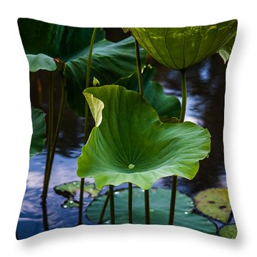 Lotuses In The Evening Light. Vertical Throw Pillow by Jenny Rainbow