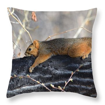 Lounging Fox Squirrel Throw Pillow