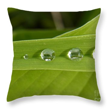 Throw Pillow featuring the photograph Love Gathering by Agnieszka Ledwon