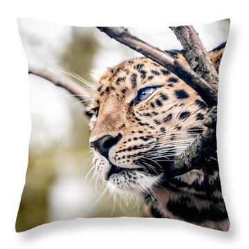Throw Pillow featuring the photograph Love Panther Iv by Stwayne Keubrick