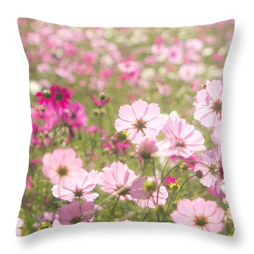 Lovely Backlit Pink And Fuchsia Cosmos Flower Field Throw Pillow