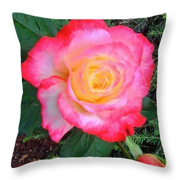 Love's First Blush - A Little Red And Throw Pillow
