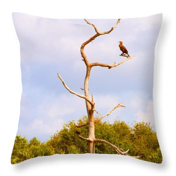 Low Angle View Of A Cormorant Throw Pillow