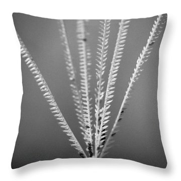 Throw Pillow featuring the photograph Loxahatchee Grass by Bradley R Youngberg