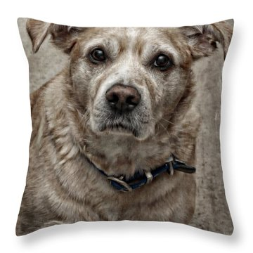 Throw Pillow featuring the photograph Loyalty  by Aaron Berg