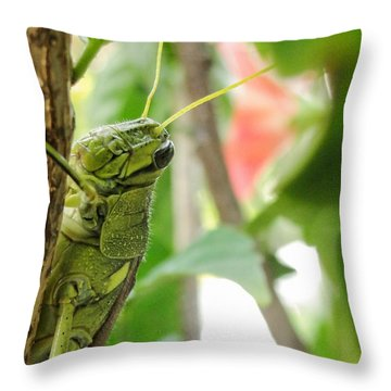 Throw Pillow featuring the photograph Lubber Grasshopper by TK Goforth