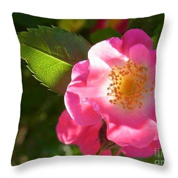 Throw Pillow featuring the photograph Luminosity by Agnieszka Ledwon
