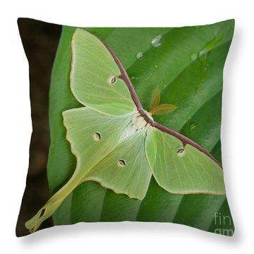 Luna Moth Throw Pillow by Alana Ranney
