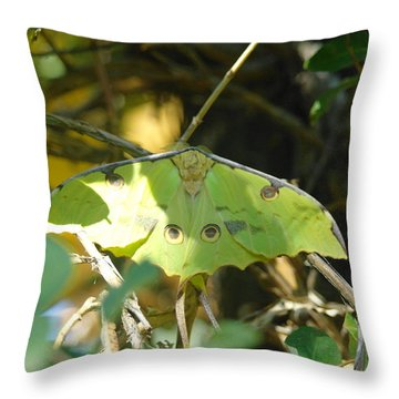 Luna Moth In The Sun Throw Pillow by Jeff Swan