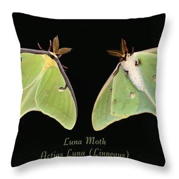 Luna Moth Throw Pillow by Kristin Elmquist