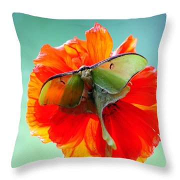 Luna Moth On Poppy Aqua Back Ground Throw Pillow by Randall Branham