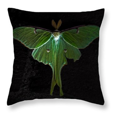 Lunar Moth Throw Pillow by Bob Orsillo