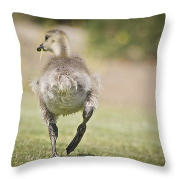 Lunch On The Run Throw Pillow by Priya Ghose