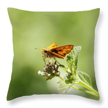 Throw Pillow featuring the photograph Lunch Time by Amy Gallagher