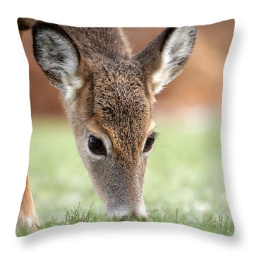 Lunch Time Throw Pillow by Karol Livote