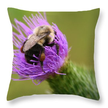 Lunching Atop A Thistle Throw Pillow by Laurel Talabere