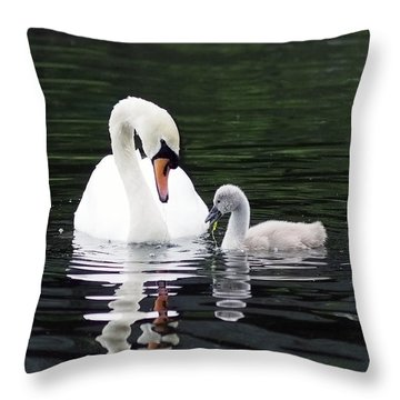 Lunchtime For Swan And Cygnet Throw Pillow