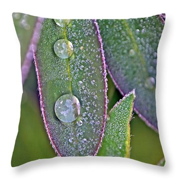 Lupin Leaves And Waterdrops Throw Pillow