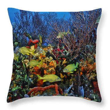 Lynns Reef On A Perfect Day Throw Pillow