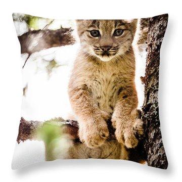 Lynx Kitten In Tree Throw Pillow