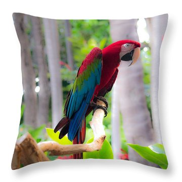 Throw Pillow featuring the photograph Macaw by Angela DeFrias