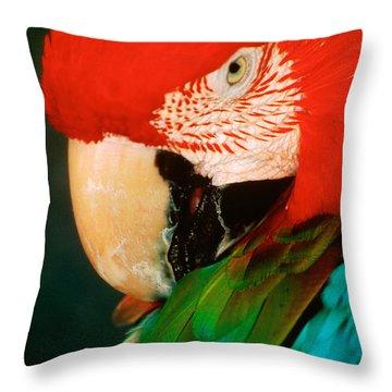 Macaw Portrait Throw Pillow
