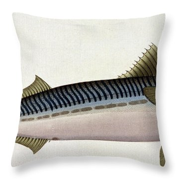 Mackerel Throw Pillow by Andreas Ludwig Kruger