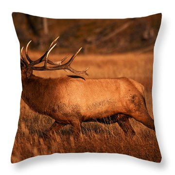 Madison Bull Throw Pillow by Mark Kiver