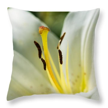 Madonna Lily - Featured 3 Throw Pillow by Alexander Senin